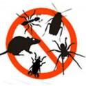 Anti insectes i rosegadors.